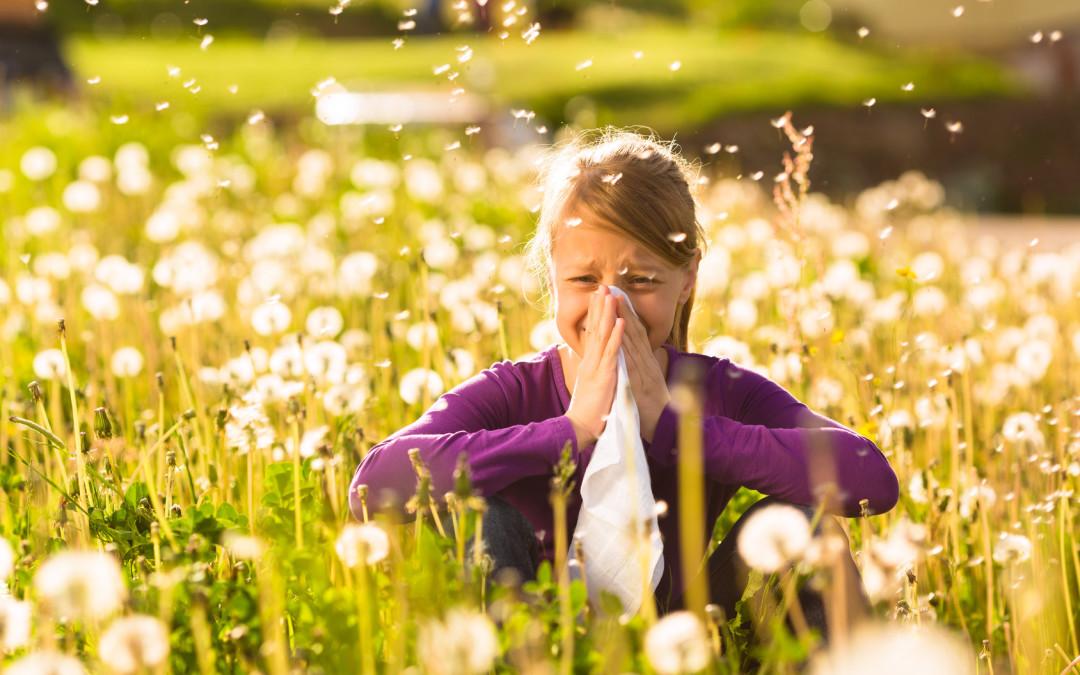 Frische Luft ohne Insekten für Allergiker